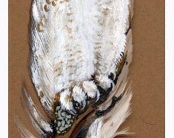 Snowy Owl Feather Print
