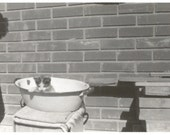 "Vintage Snapshot ""Muffin"" Kitty Cat Tin Washtub Kitten Found Vernacular Photo"