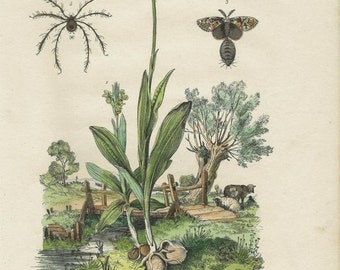 Antique Botanical Orchid and Moth Print/Engraving with original hand-coloring, by Guérin-Méneville, from Histoire Naturelle, 1834 - Orchid