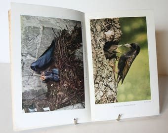 Birds of the field Guide Book illustrated in colour Vintage Science nature Book, Bird watching study guide UK