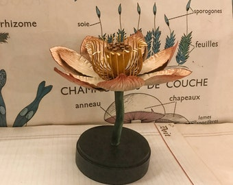 Biological model Lotus flower
