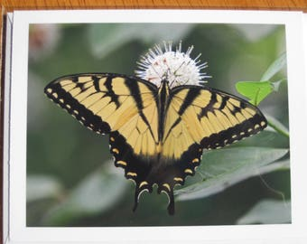 Swallowtail butterfly photo note card