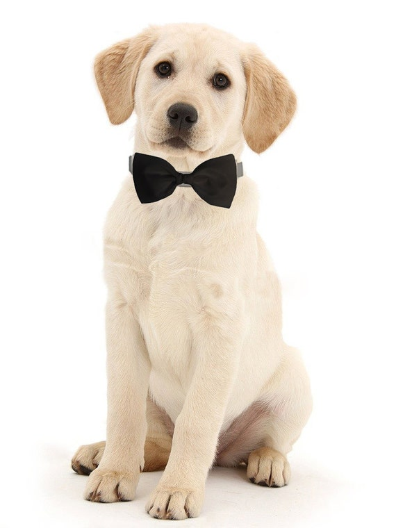 Formal black Dog Bowtie