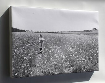 Canvas 24x36; A Child Picking Carnations In A Carnation Field At Redondo Beach, Los Angeles, Ca.1904-1920 (-5488)