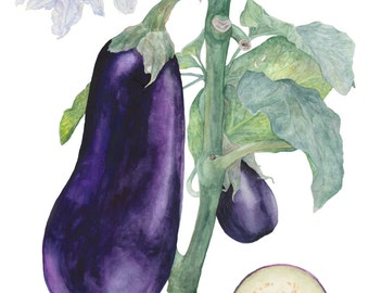 Eggplant Vegetable Watercolor Illustration , Kitchen Art Decor, Botanical Food Poster,