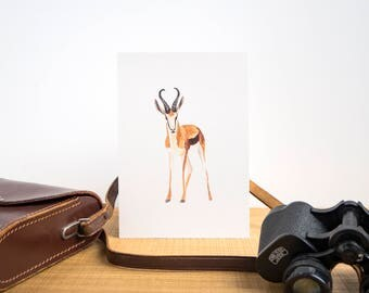 African Springbok Illustrated Watercolour A5 Print // African Animals Series // South Africa National Antelope Painting