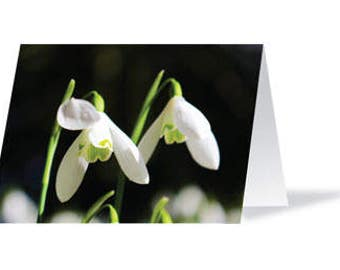 Snowdrops Greeting Card, Blank Card, Snowdrops, Card, Greeting Card, Snowdrops Card, All Occasions, Flowers Card, Flowers, Sympathy Card