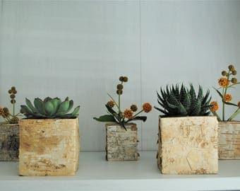 Birch pot, birch cube, birch planter, rustic home decor, succulent pot, succulent planter, herb planter, herb pot, flower planter, wood pot