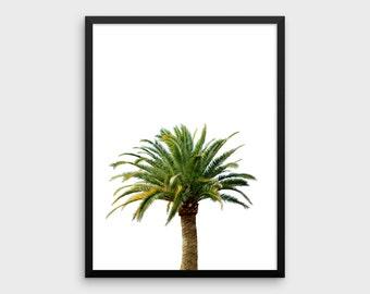 Palm Tree Printable | Palm Tree Poster, Palm Tree Wall Art, Palm Tree Art, Tropical Poster, Tropical Wall Art, Botanical Print, Summer Print