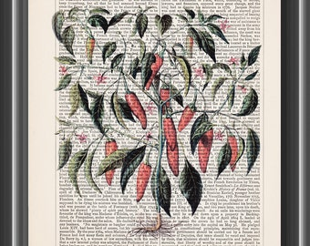 vintage Chilli plant Basilius Besler art print kitchen decor wall art dictionary botanical print wall art gardening gift