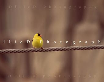 Song Bird On Wire - Fine Art Greeting Card