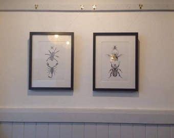Framed Arachnids Illustration