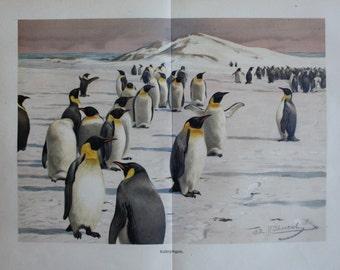 old litho print penguin