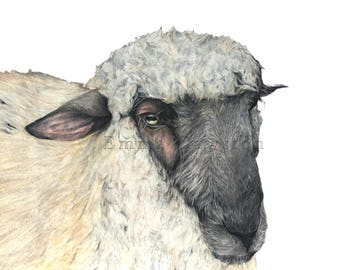 Shadows of Beauty ( Sheep ) Limited Edition