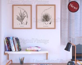 Vintage gasteria print, Vintage haworthia print, Botanical succulent illustration, Succulent art, Instant download succulent print set, JPG