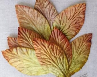 Velvet leaves, dark golden rod