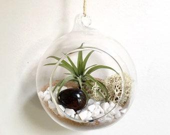 Capricorn January Garnet Air Plant Garden Kit • terrarium tillandsia birthstone crystal birthday personalize gift diy present decor airplant