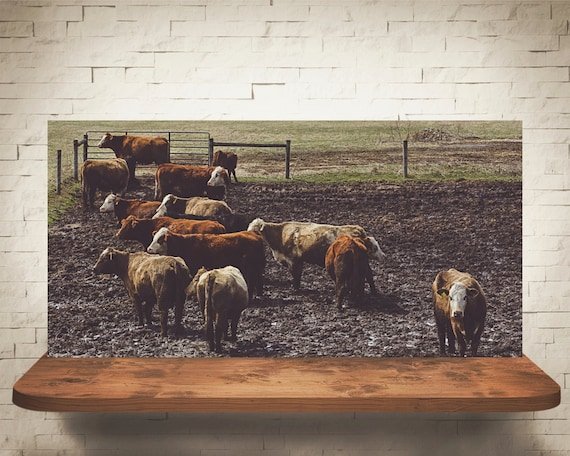 Cattle Gathering Photograph - Fine Art Print - Home Wall Decor - Cow Pictures - Ranch - Rustic Farm House Decor - Country - Gifts - Cows