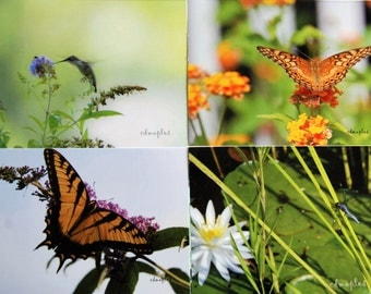 Butterfly Blank Note Cards, Photo, Photography,  Insects, Hummingbird, Dragonfly, Butterflies, Nature, Greeting Card