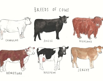 Breeds of Cows Greetings Card