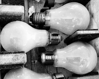 Colony of light bulbs...