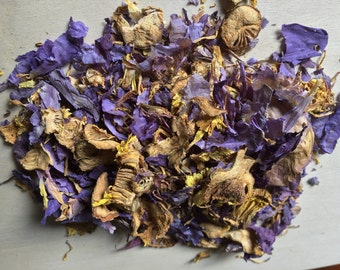 "Blue Lotus, Nymphaea caerulea (Cut and Sifted) ""Baby Blue Thai"" ~ Sacred Herbs and Spices from Schmerbals Herbals"
