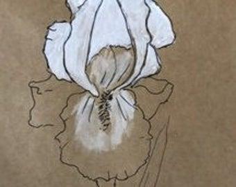 White Iris #4
