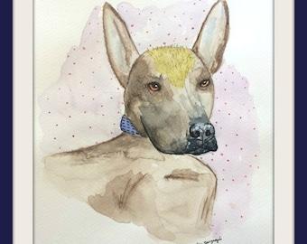 The king, original watercolor painting, 2017, 8''x11'', xolo dog, xoloitzcuintle, xoloitzcuintli, mexican hairless dog, hairless dog