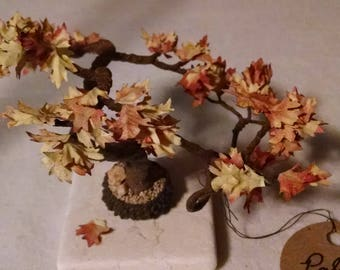 Acorn Cap Bonsai Tree - Early Autumn Gold