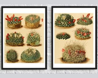 Cactus print Set of 2 Botanical illustration print flowers print nature art wall art decor dorm room decor living room decor poster