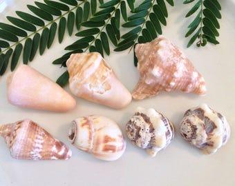 Sea shells, Wedding Sea Shells, Beach Coastal Decor, Cottage Chic Coastal, Sea Shell Home Decor, Shabby Chic Shells, Beach Wedding Shells