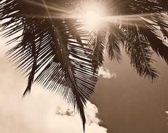 Palm Trees, Palm Tree Print, Sepia Palm Tree, Palm Tree Photograph, Sepia Photograph