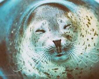 Seal print,Seal fine art photography,Seal fine art print,Seal art,oriental,photography,art print,photo,picture,wall art,artwork,print,décor,