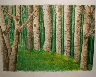 Birch forest, art print limited 21 x 14 cm