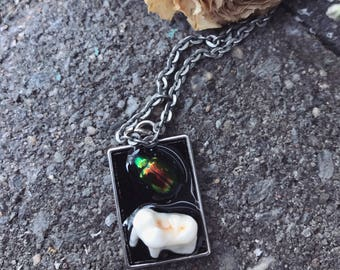Beetle tooth necklace