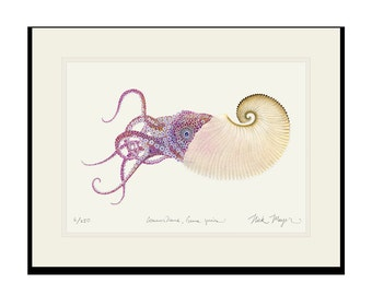 Paper Nautilus Limited Edition Signed Print