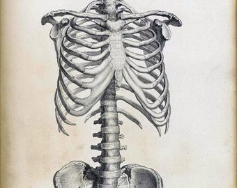 New Vintage Medical Anatomical Anatomy Skeleton Illustration Real Canvas Art Print