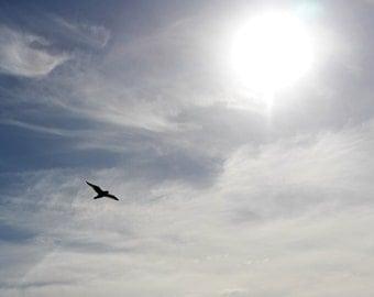 Seagull and the Sun Photo