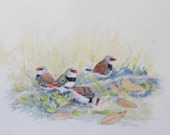 Diamond Firetail, original watercolour bird painting