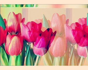 Tulips & Wildflowers