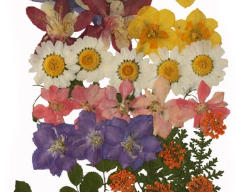 Pressed flowers mix, columbine, daffodils, larkspur, Queen Ann's lace, daisy, rose leaves foliage for art craft card making scrapbooking