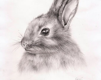 Rabbit Drawing Art Print