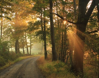 COuntry road, Crepuscular rays, Nature photography, Forest, Summer, Trees, Green, Woodland, Sunrise,