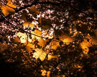 Autumn Leaves- Original Landscape/Abstract Photo Print Artwork