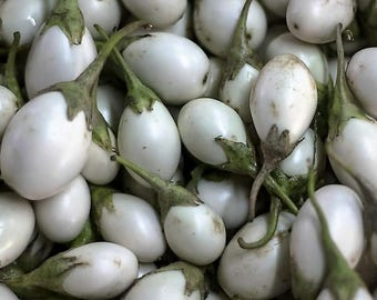 40 White FINGER FRUIT EGGPLANT Solanum Melongena Aubergine Fruit Vegetable Seeds