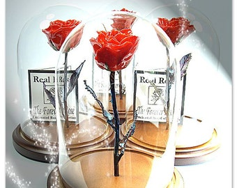 Forever Rose - The Beauty and the Beast Rose - Enchanted Rose - This is a Real Red Rose preserved to last FOREVER!