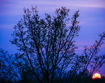 Blue Sunset, tree, nature, silhouette, sunset, fine art photography, print, wall art