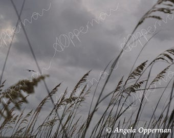 Gulls and Grass // Photography // Birds // Instant Download
