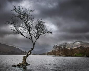 Landscape: The Tree Llanberis