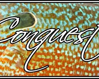 Conquest Outdoors Longear Sunfish Sticker